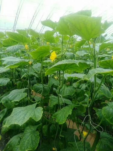 蔬菜水溶肥追肥方式有哪些?不同蔬菜追肥有啥优缺点?