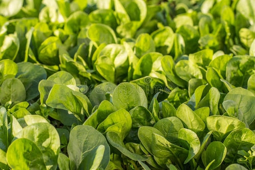 大棚蔬菜施水溶肥一定要注意使用方式!