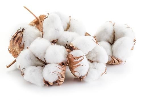棉花上用什么水溶肥比较好